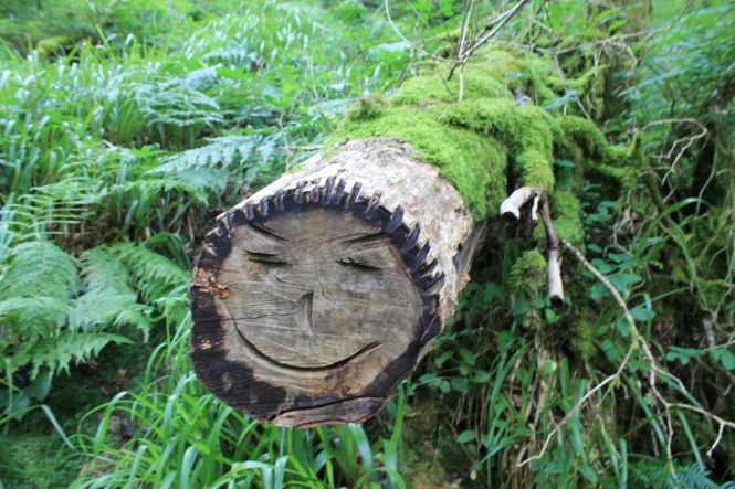 Smile carved in a tree Lydford gorge