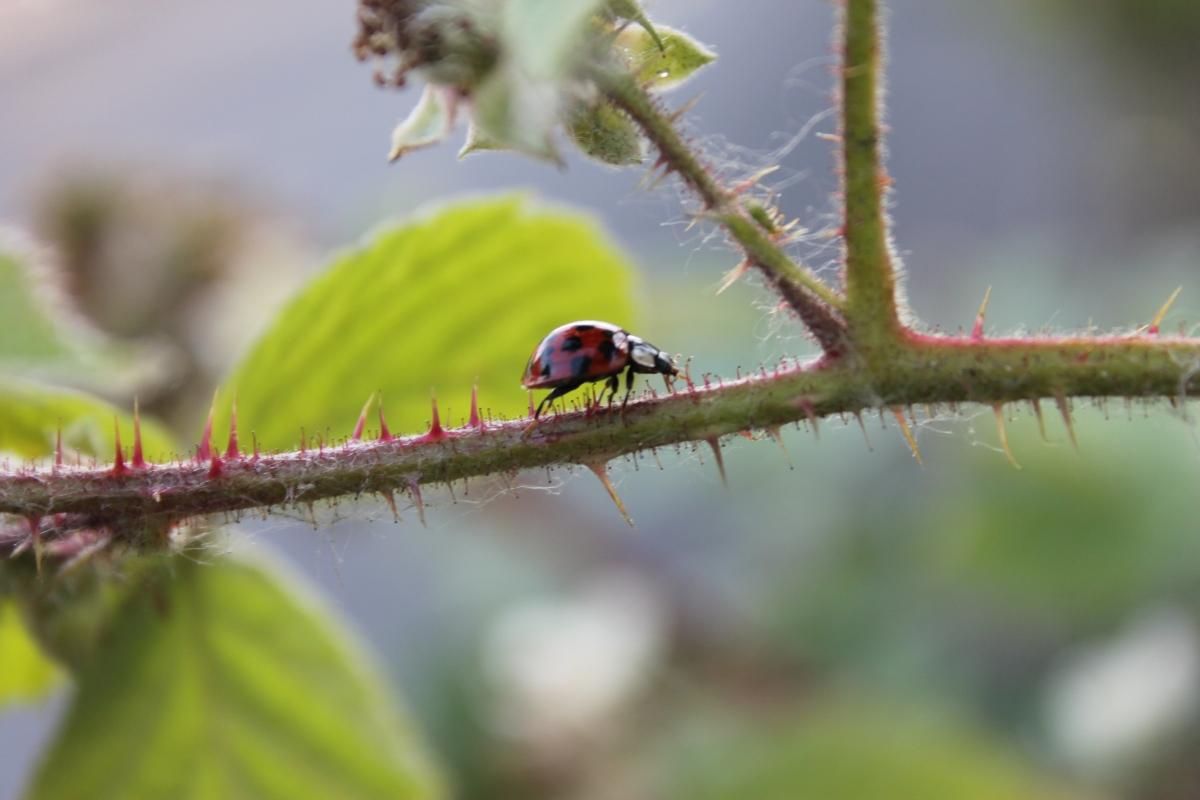Around Etruria with my camera: A ladybird model