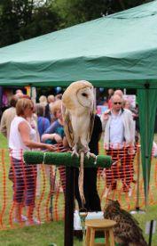 Etruria Canal Festival - owls