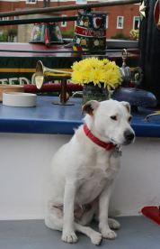 Etruria Canal Festival - doggie