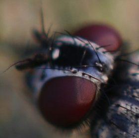 fly-eye-detail