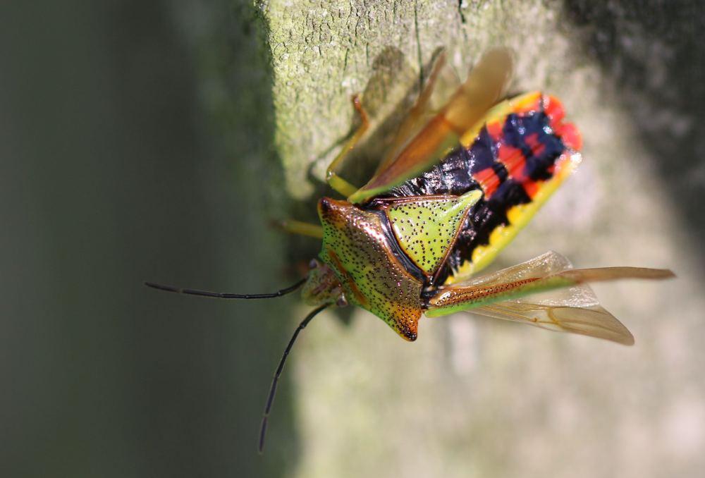 Insect macro photo