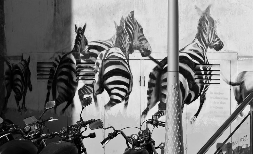 Street art black and white zebras graffiti Barcelona