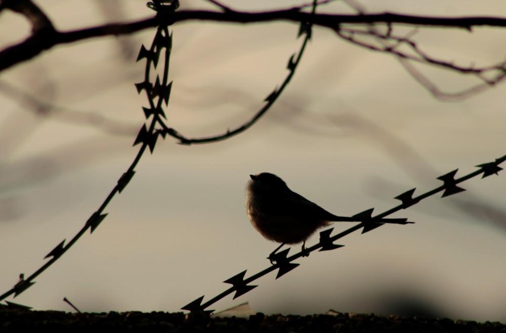 bird Etruria Stoke on Trent