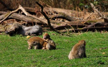 Monkey Forest, Trentham