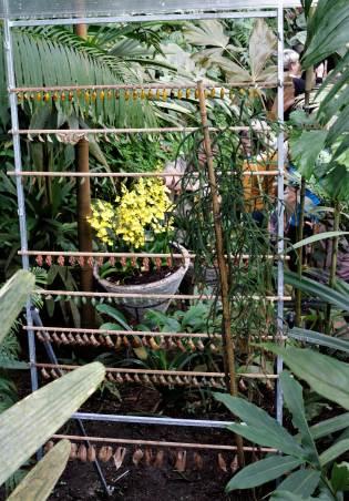 Botanical Garden Prague butterflies