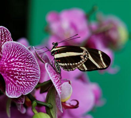 Botanical Garden Prague butterflies orchids