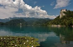 Bled lake castle Slovenia water lilies